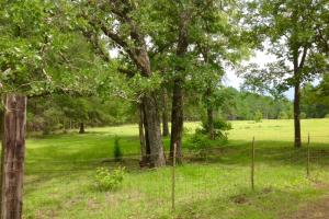 Fenced pasture area with mature pecan trees. #GeorgiaLandForSale (3 of 62)