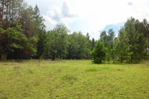 Perfect for hunting and recreational use. #GeorgiaLandForSale (20 of 62)