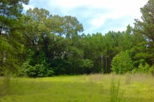 Back fields and wildlife open areas. #GeorgiaLandForSale (19 of 62)