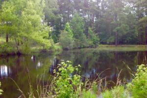 Second pond. Pefect for bream or catfish. #GeorgiaLandForSale (28 of 62)