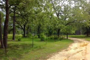 Winding driveway lined with fencing and mature trees. #GeorgiaLandForSale (4 of 62)