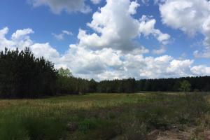 Cut Bank Creek Recreational Farming & Timber Tract in Lamar, AL (9 of 12)