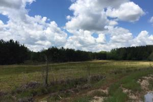 Cut Bank Creek Recreational Farming & Timber Tract in Lamar, AL (10 of 12)