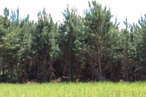 Cut Bank Creek Recreational Farming & Timber Tract in Lamar, AL (8 of 12)
