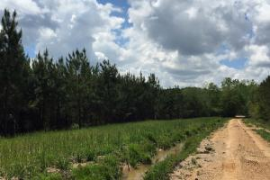 Cut Bank Creek Recreational Farming & Timber Tract in Lamar, AL (11 of 12)