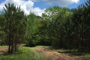 Cut Bank Creek Recreational Farming & Timber Tract in Lamar, AL (4 of 12)