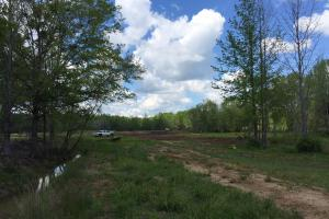 Cut Bank Creek Recreational Farming & Timber Tract in Lamar, AL (6 of 12)