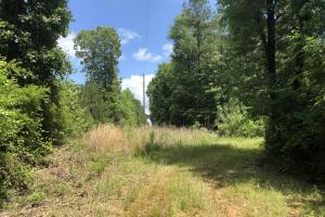 80 Acres Sallis - Attala County MS