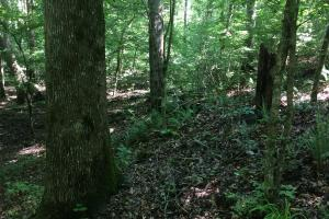 28 Acre Hunting / Timber Property  - Stewart County GA