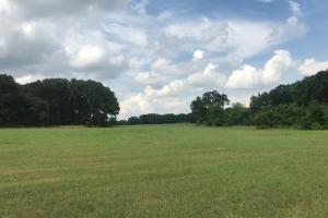 Rolling pasture, Timber, Ponds, near Cedar Creek Lake - Henderson County TX