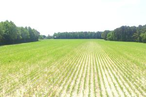Whiteville Farm and Timber Land with Highway Intersection - Columbus County NC