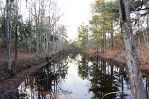 Long Leaf Pine Straw Investment - Williamsburg County SC