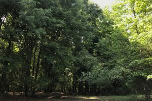 Mini Farm and Homesite, 8.62 Acres - Greenville County SC