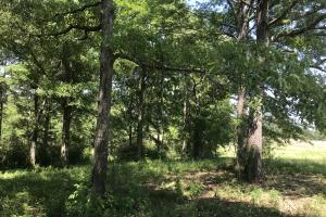 Lamar Co. Sheriff Auction Main Tract - 230 acres in Lamar, MS (7 of 33)