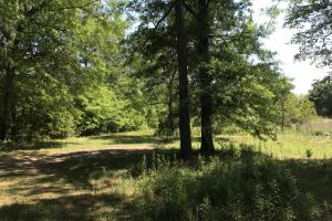 Lamar Co. Sheriff Auction Main Tract - 230 acres in Lamar, MS (10 of 33)