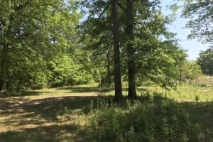 Lamar Co. Sheriff Auction Main Tract - 230 acres in Lamar, MS (8 of 33)