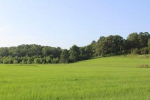 Selma Pasture, Hay and Hunting Land - Dallas County AL