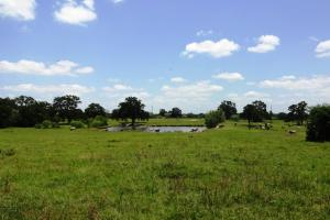 Rolling Hills, Lakes, Creek, Large Trees, Pasture, Abundant Wildlife - Madison County TX