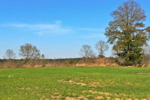 Flat Creek Hunting and Timber Investment Tract - Washington County AL