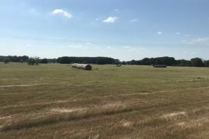 Pasture, Trees, 10 acres, Mabank ISD - Kaufman County TX