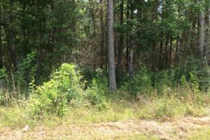 Lumberton Timber Tract - Lamar County MS