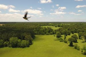 35 Acre Homesite/Recreational Tract - Trinity County TX