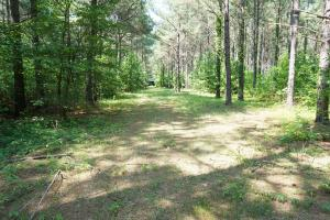 Akron Timber and Hunting Opportunity in Hale, AL (7 of 9)