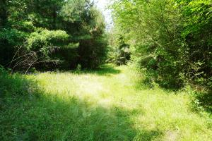 Akron Timber and Hunting Opportunity in Hale, AL (8 of 9)