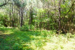 Akron Timber and Hunting Opportunity in Hale, AL (6 of 9)