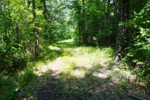 Akron Timber and Hunting Opportunity in Hale, AL (9 of 9)