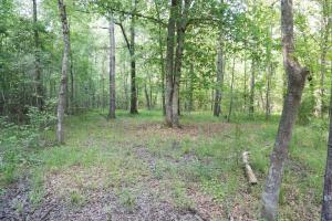 Akron Timber and Hunting Opportunity in Hale, AL (4 of 9)