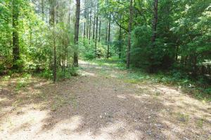 Akron Timber and Hunting Opportunity in Hale, AL (5 of 9)