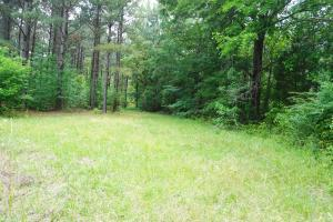 Akron Timber and Hunting Opportunity in Hale, AL (3 of 9)