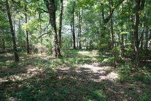 Akron Hunting and Timber Investment in Hale, AL (4 of 4)