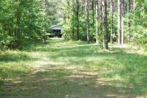 Akron Hunting and Timber Investment in Hale, AL (3 of 4)