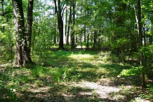 Akron Hunting and Timber Investment in Hale, AL (2 of 4)