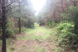 Ranch Road Hunting and Timber Investment - Marion County AL