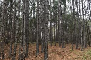 Weogufka Creek Recreational and Hunting Tract - Coosa County AL