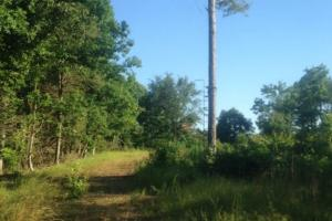 Tallahatchie Hill Country Hunting Tract - Tallahatchie County MS