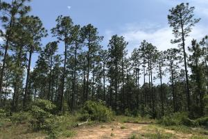The Little Halls Creek Tract - Baldwin County AL