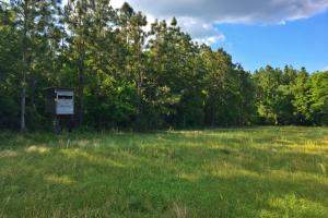 Lottie Hunting and Farm Tract - Baldwin County AL