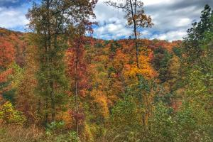 Yadkin Valley Tract in Caldwell, NC (33 of 96)
