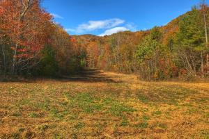 Yadkin Valley Tract in Caldwell, NC (6 of 96)