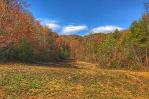 Yadkin Valley Tract in Caldwell, NC (5 of 96)