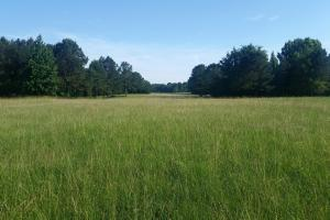 Acreage and Pasture Close to Oxford - Lafayette County MS