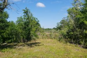 Pinewood Preserve Country Homesite in DeSoto, FL (4 of 16)