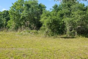 Pinewood Preserve Country Homesite in DeSoto, FL (5 of 16)