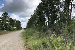 80 acres near Bogue Chitto State Park - Washington Parish LA