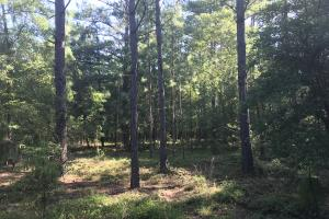 Kitchings Mill Hunting and Timberland in Aiken, SC (15 of 35)