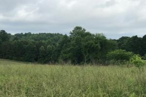 30 +/- Acres Fenced Pasture - Franklin County, GA
